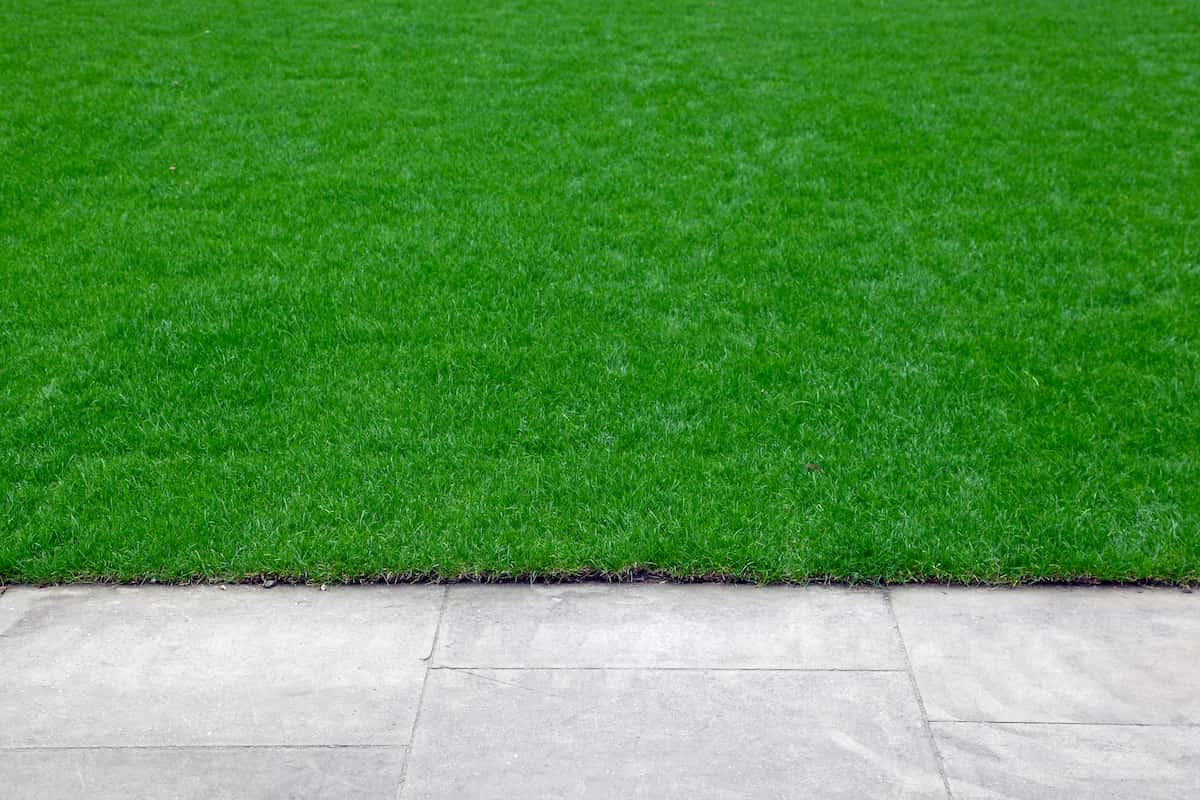 how to edge your lawn perfectly