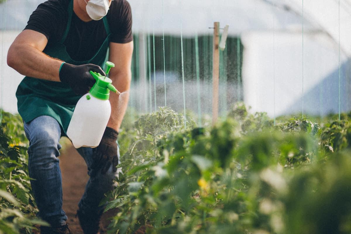Farmer spraying plants