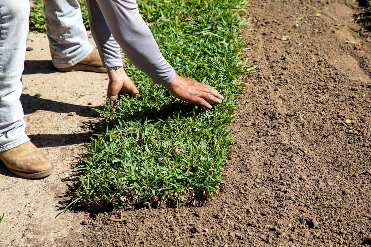 man installing sod in front yard