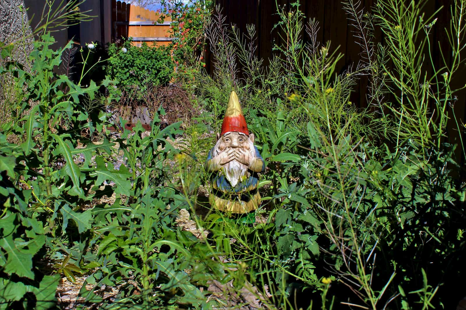 garden gnome among weeds