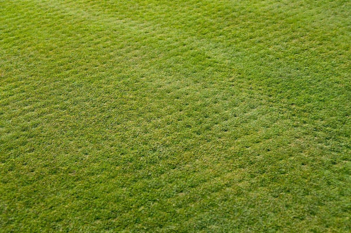 How To Aerate Your Lawn Care Guide By Love