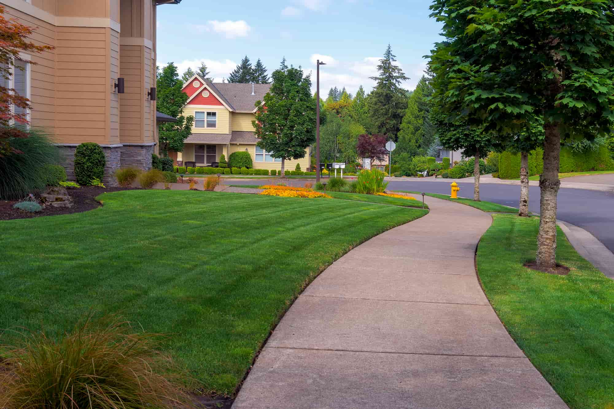 front yard and curb after edging