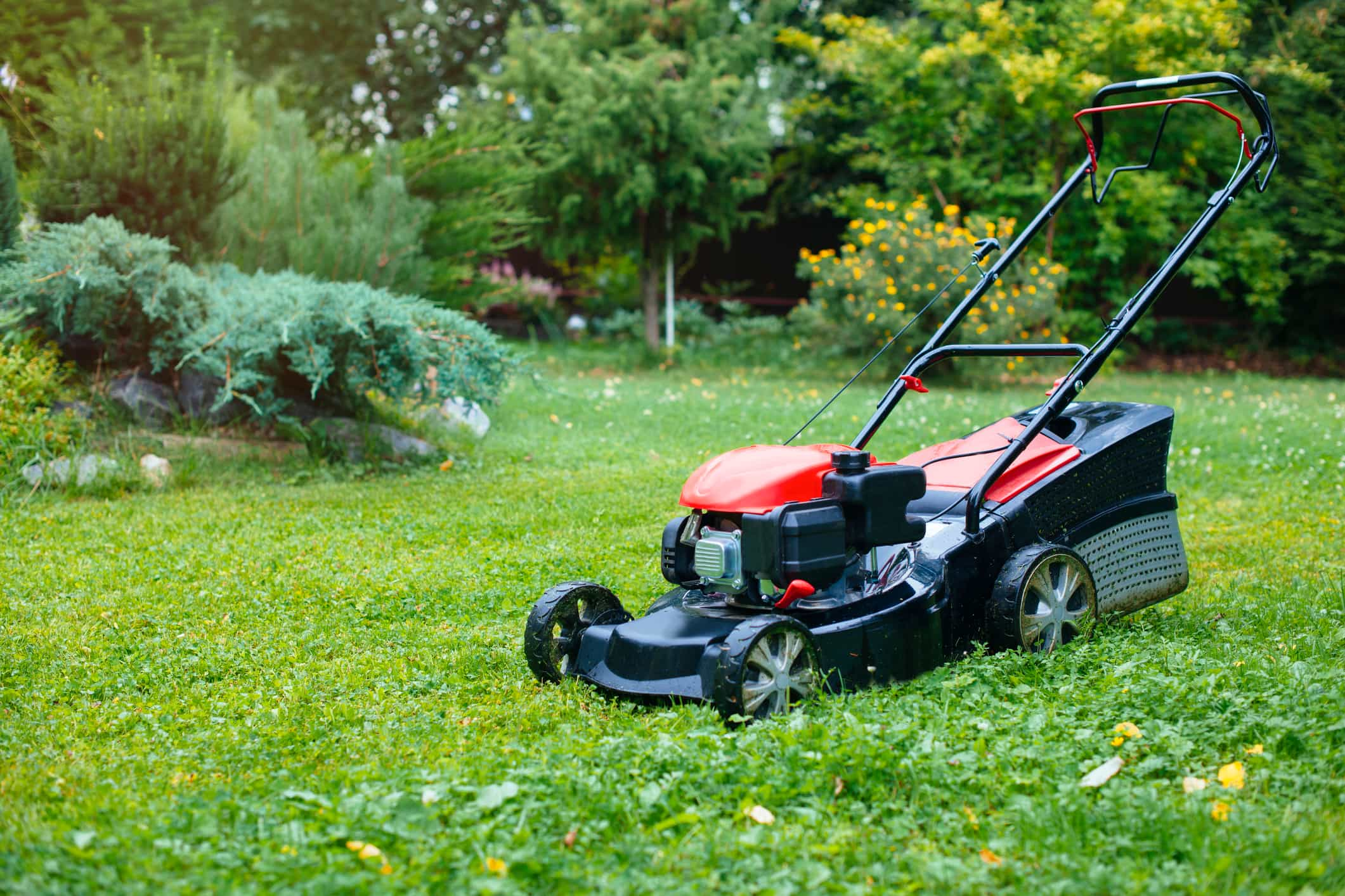 best lawn mowers for mowing a back yard