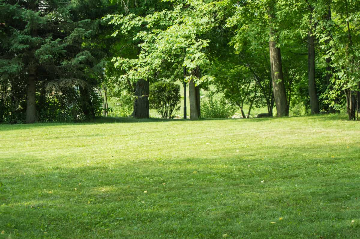 lawn with trimmed grass and trees