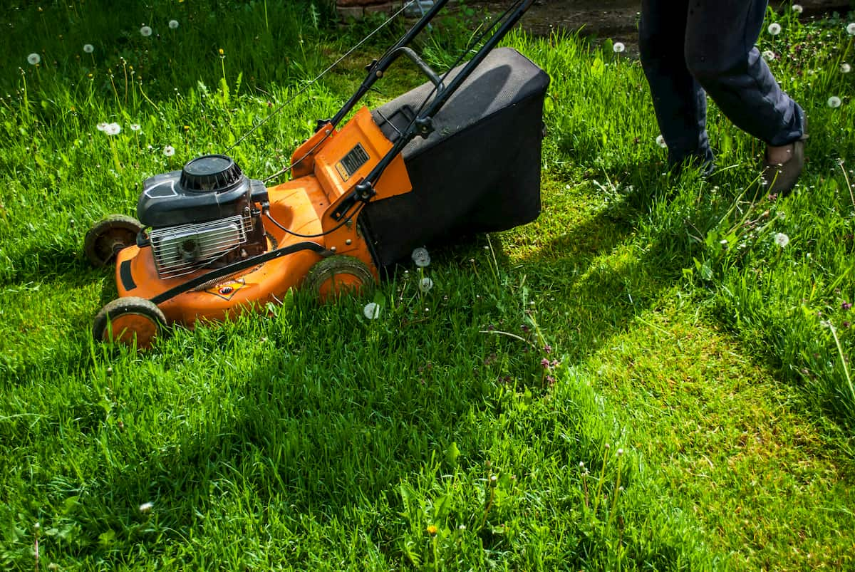 Man mowing grass on farm