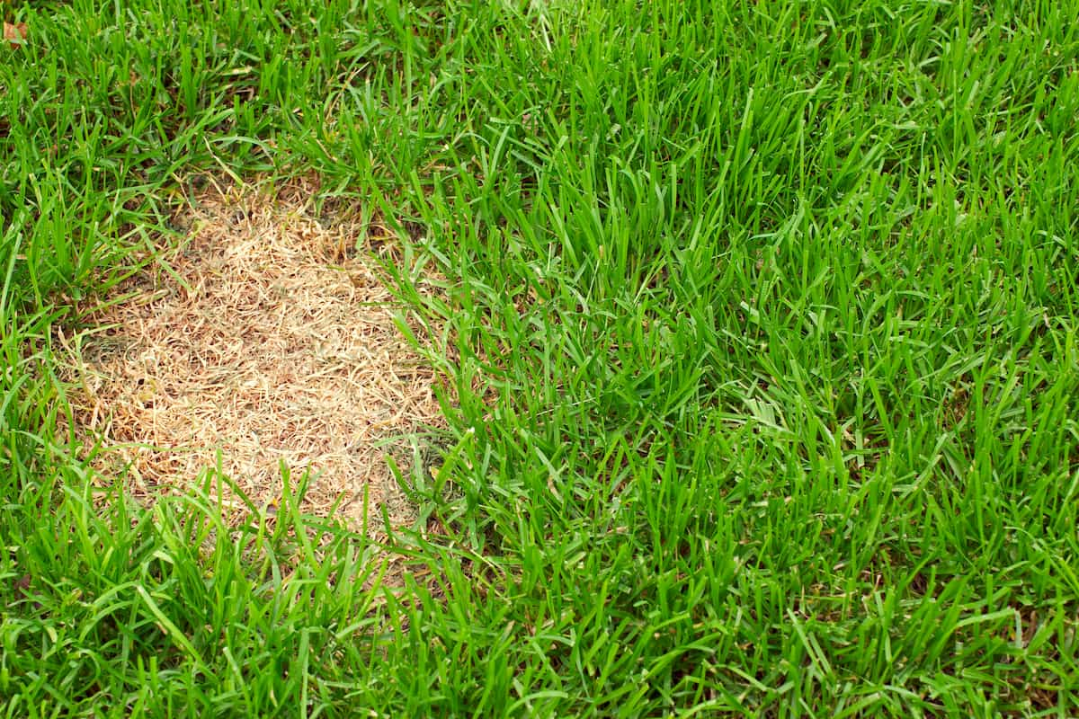 how to repair a patch of dead grass