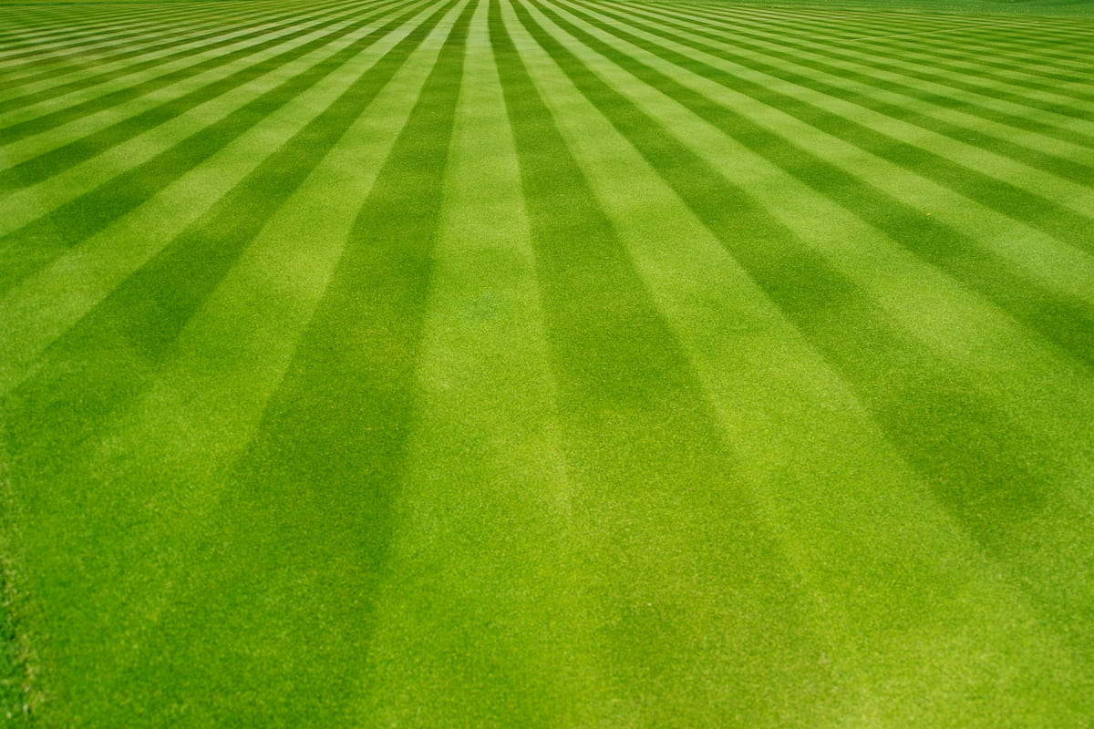 perfectly striped and mowed lawn