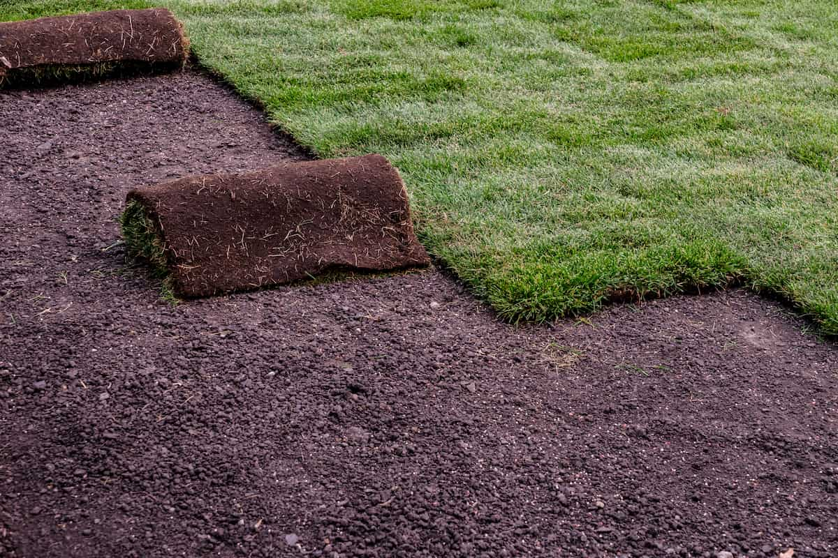installing rows of sod on lawn