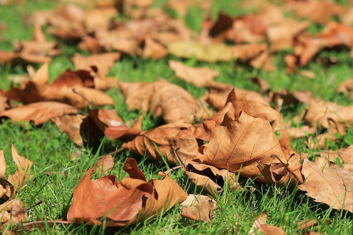 The Secrets of Fall Lawn Care