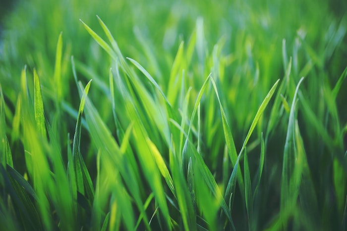 How to Take Care of Your Lawn