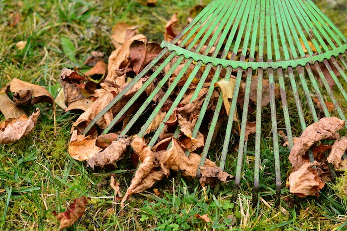 5 Essential Fall Lawn Care Tips
