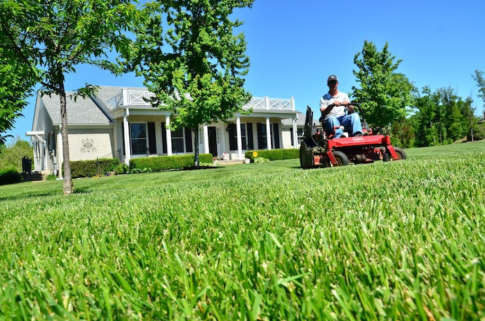 How High Should Your Grass Be Cut?