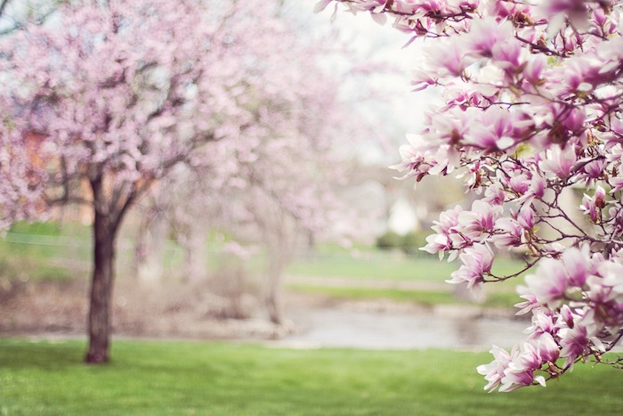 What Should I Do for My Lawn Right Now – A Season by Season Lawn Care Guide