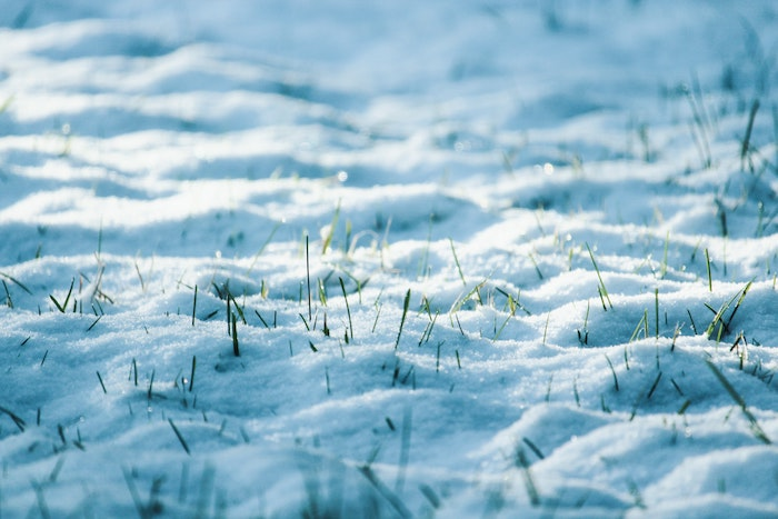Winter Wonderland: The Impact of Snow on Your Grass