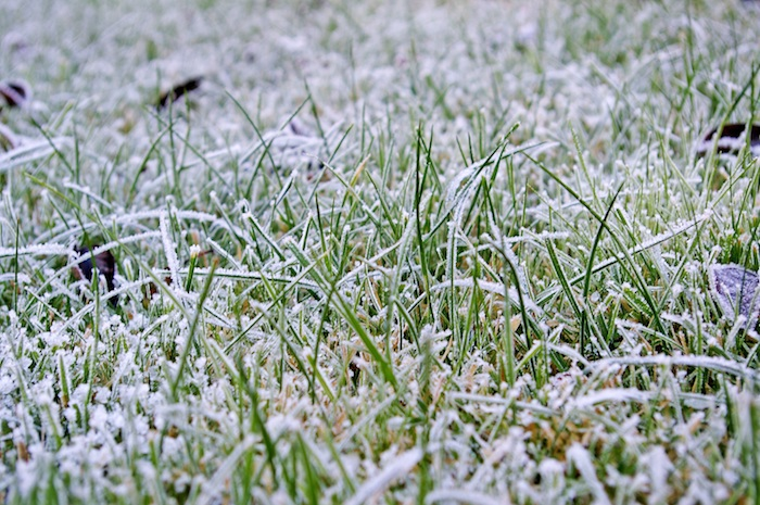 On Watch: Winter Lawn Diseases