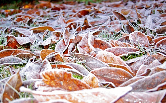Keep Off the Snow: Keeping Your Lawn Healthy in Heavy Snow