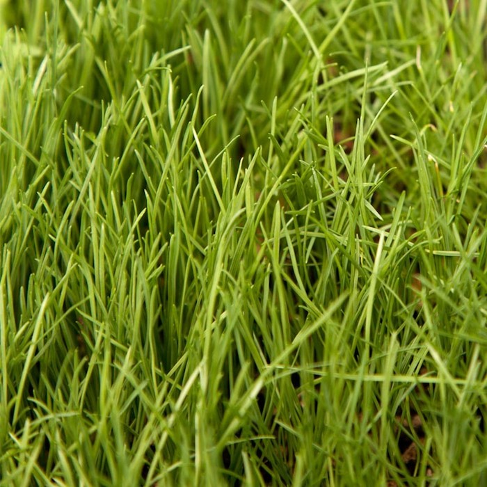 Different Types Of Grass Lawn Love
