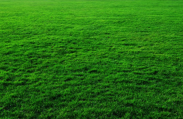 Best Time to Aerate and Overseed a Lawn