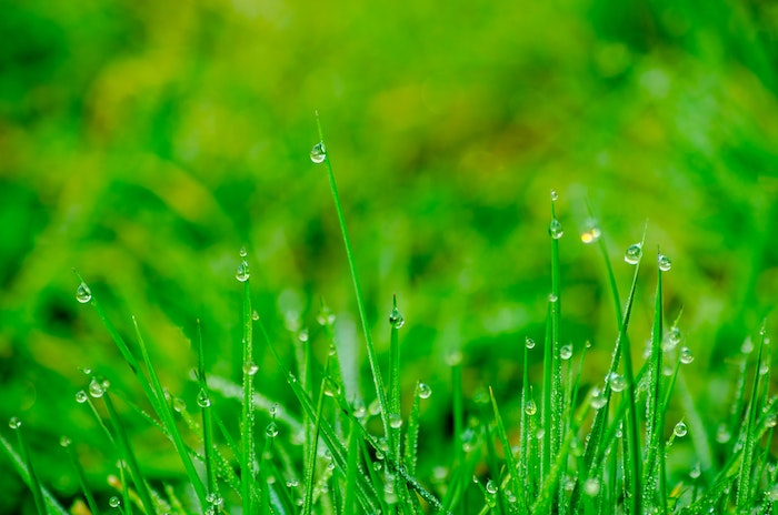 Mowing the Lawn When Wet