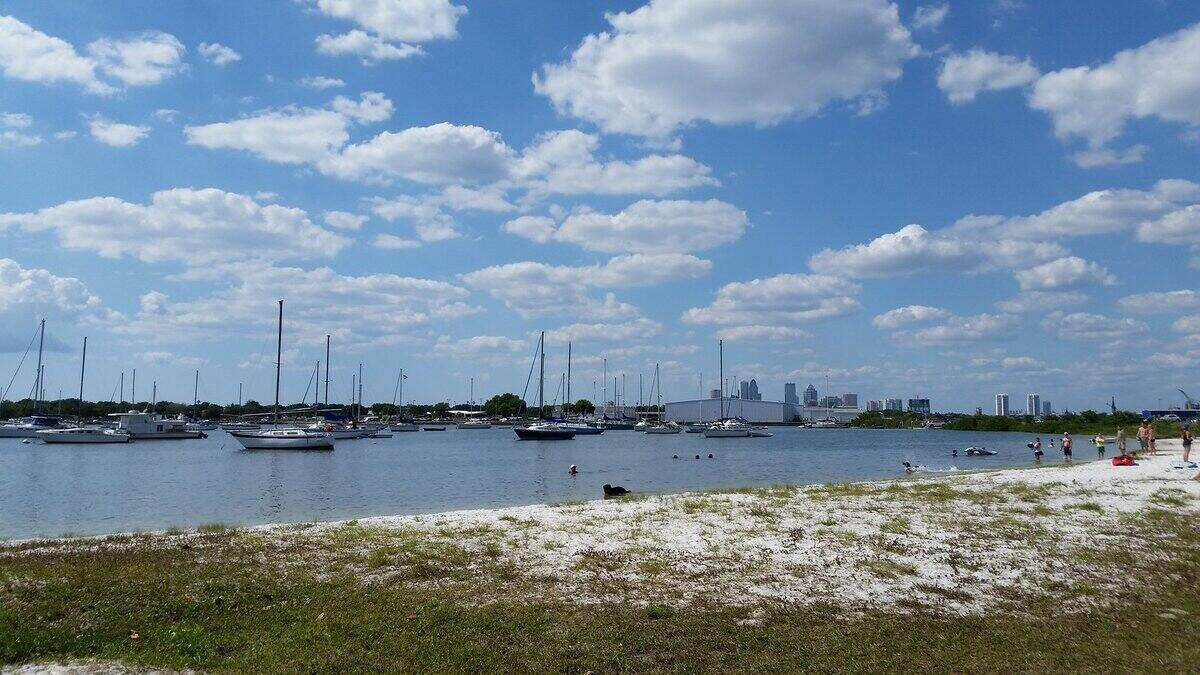 View from the Davis Island dog beach in Tampa, FL looking out to the water where there are multiple sailboats