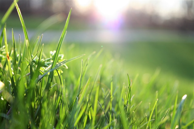 How to Aerate a Lawn by Hand