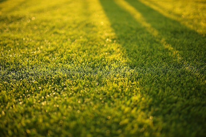 How to Easily Grow Grass in the Shade