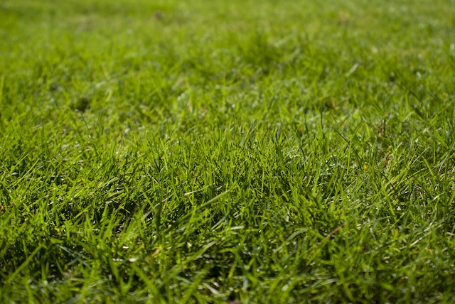 How to over-seed a lawn