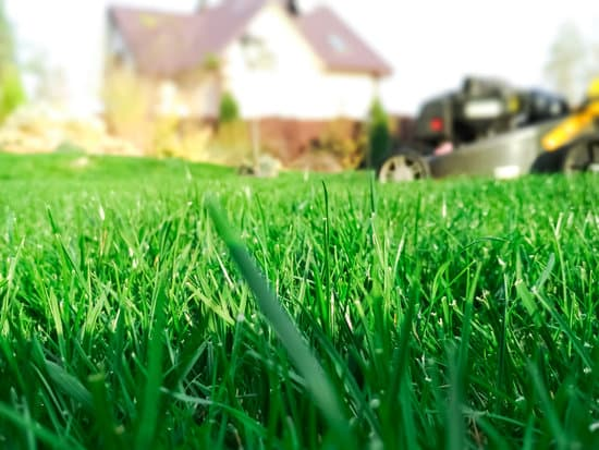 Guide to lawn fertilization