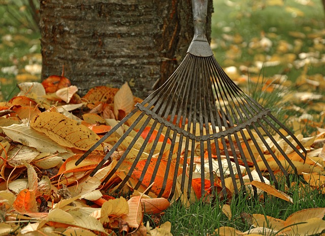 The Best Way to Remove Leaves From Your​ Yard
