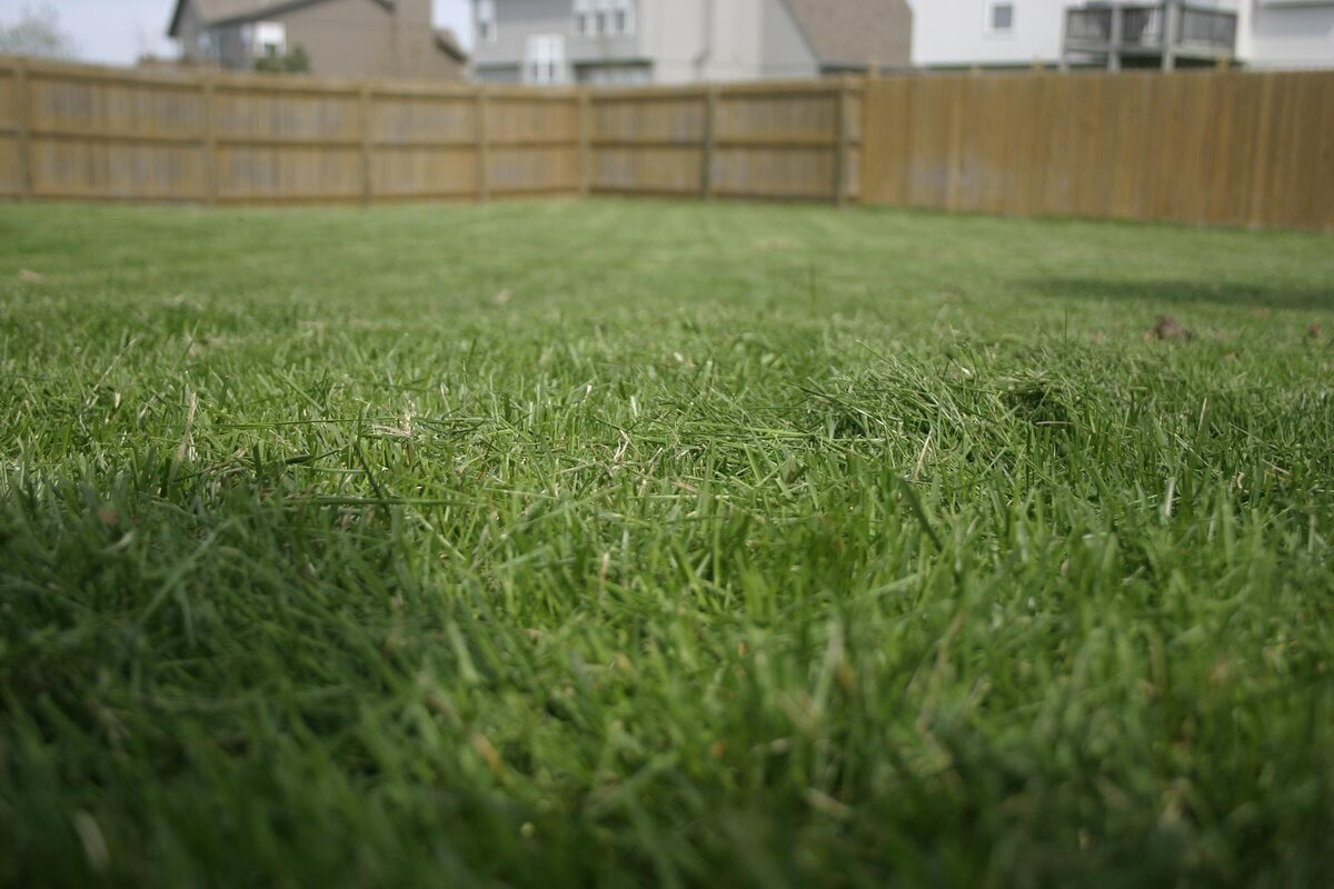horizontal look at a freshly mowed lawn with a fence in the background