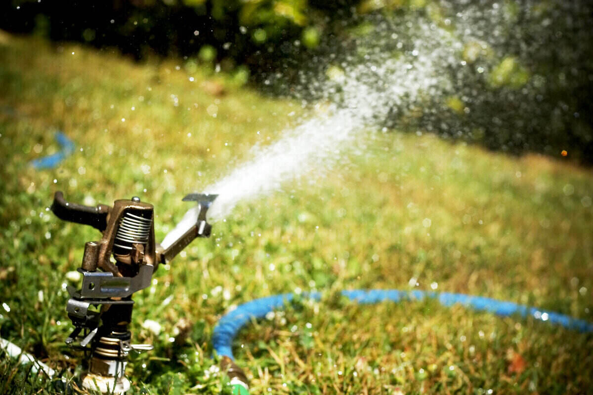 Close-up of a sprinkler head shooting water out onto a lawn