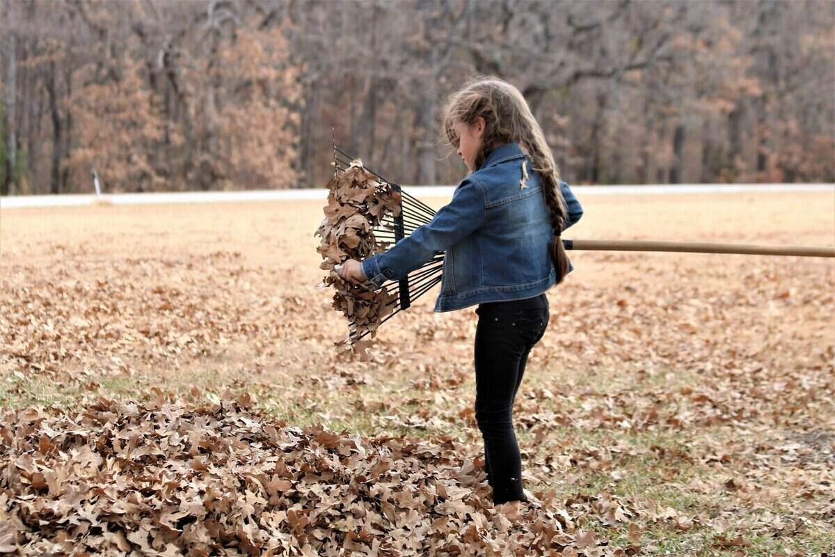 Young girl standing in a open area, surrounded by leaves and she is pulling leaves off of the bottom of a rake