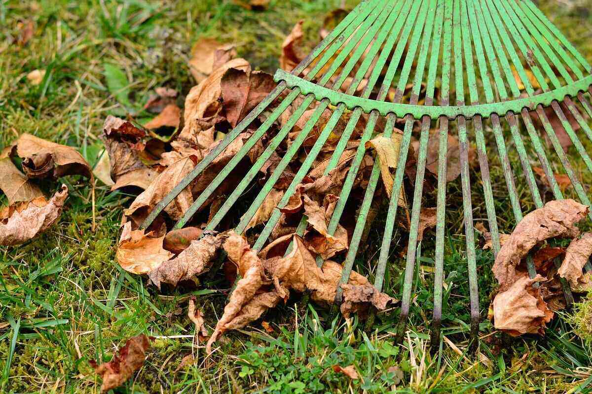 Close-up of a green rake with leaves trapped beneath it's tines