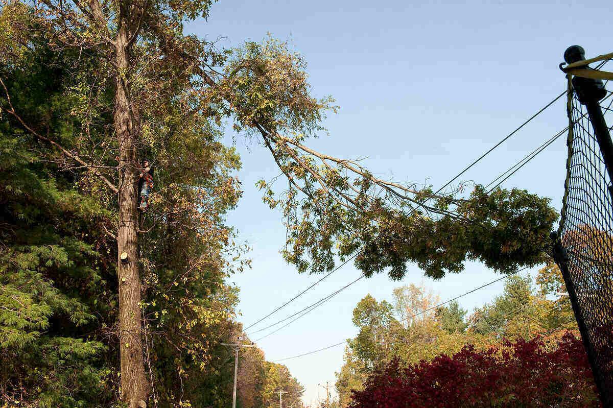 Tree limb hanging down into powerlines
