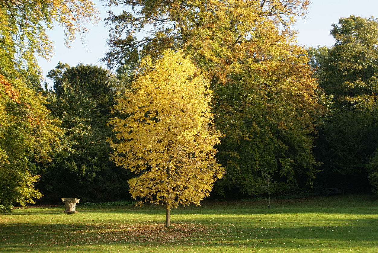 Fall lawn care ideas