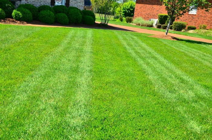How Much You Should Charge to Mow a Lawn