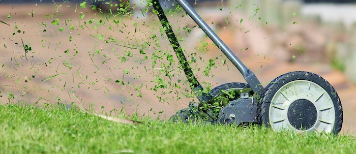 The Best Time to Cut Grass