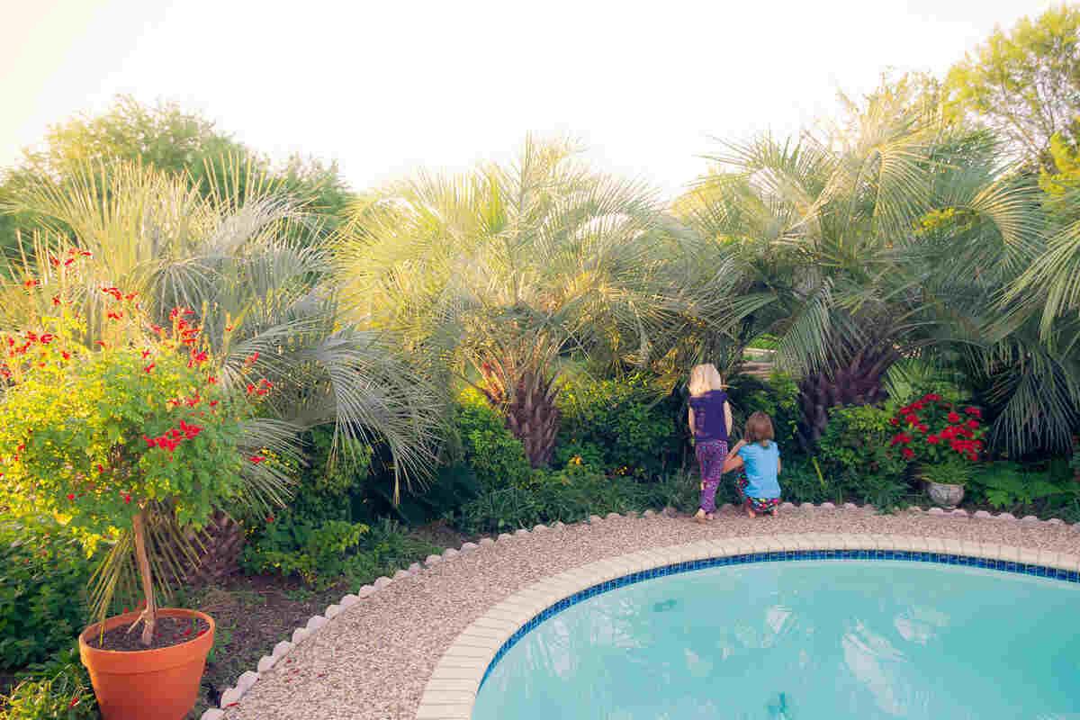 9 Low-Maintenance Landscaping Ideas for San Antonio, TX