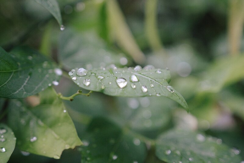 close-up of a plant with water droplets on the leaves