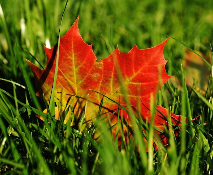 How to Prepare Your Nashville Lawn for Cooler Weather