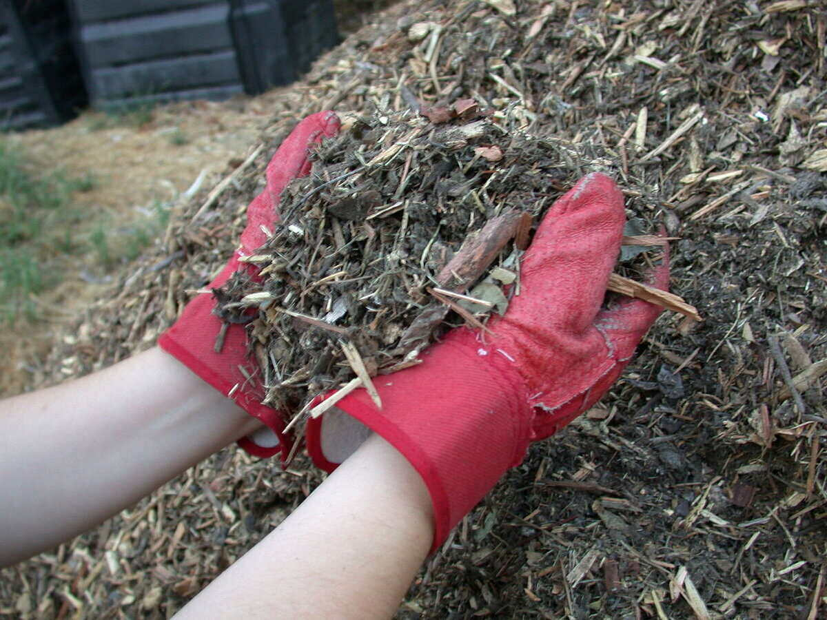 person holding a large handful of mulch in their cupped hands with a large pile of mulch behind them