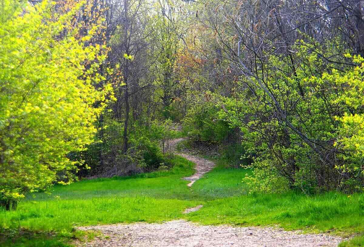 looking out into the woods during spring, where there is a small path leading further into the background