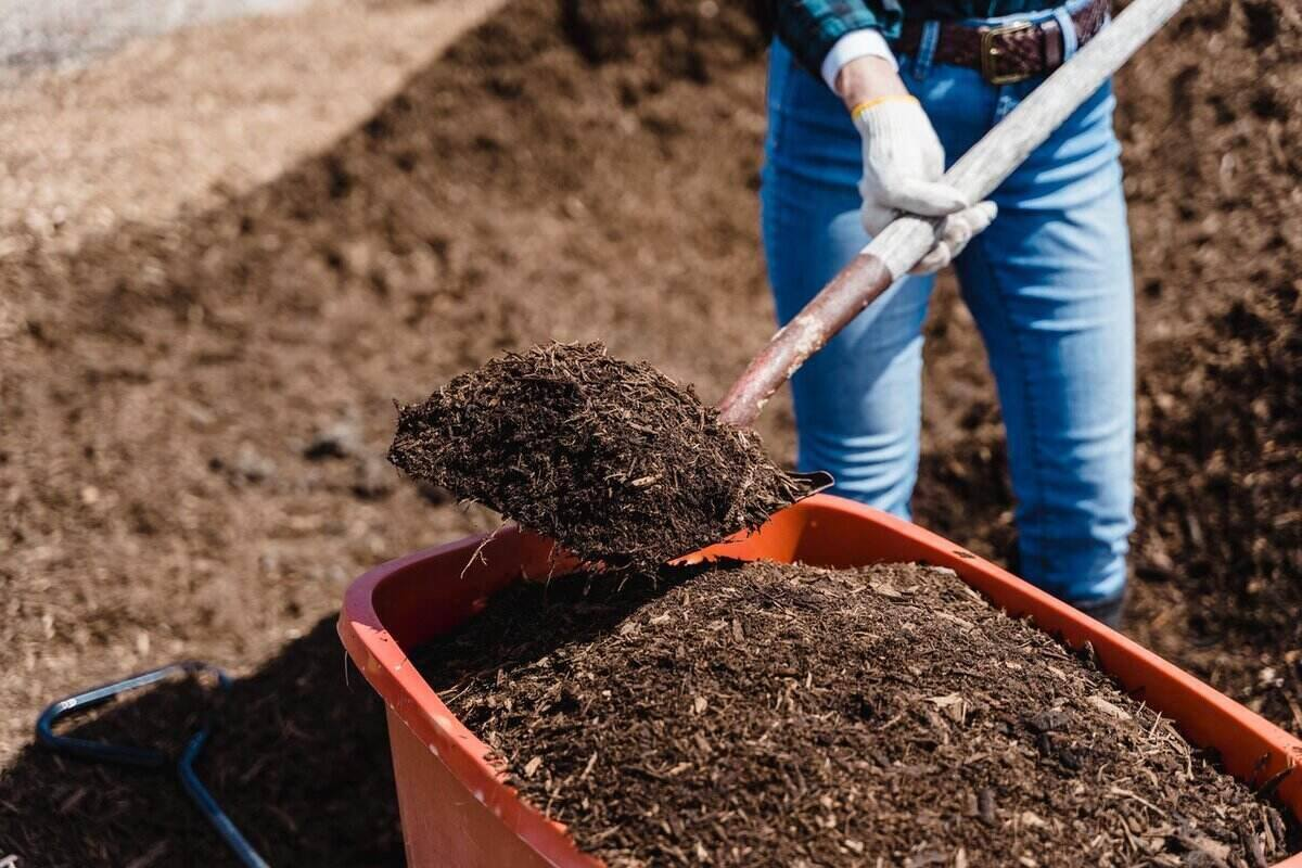 Person using a shovel to add mulch from a large pile into an orange wheelbarrow